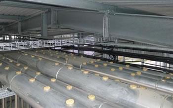 afastamento de pombos em industria com repelente em gel bird free