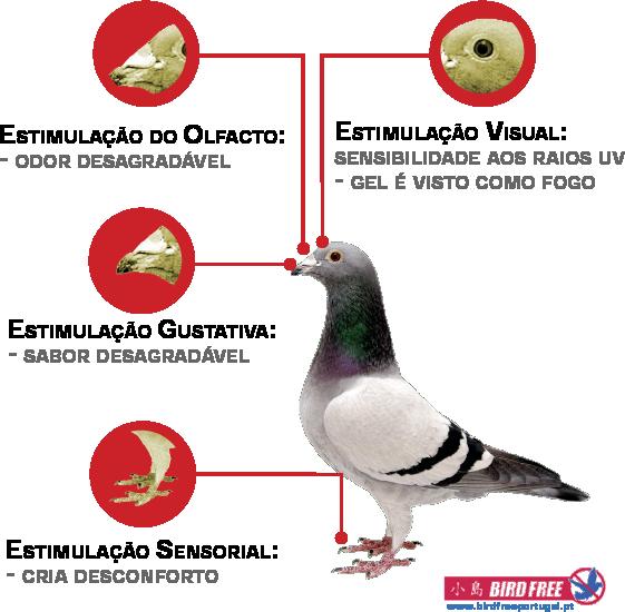 afastamento dos pombos repelente gel bird free